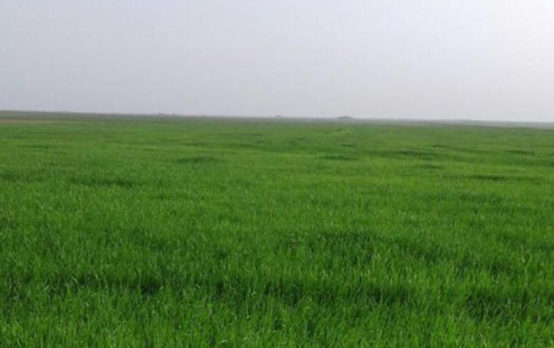 المزارعون يشتكون من ارتفاع اسعار الاسمدة وتحديد سعرها بالدولار في ظل قلة الانتاج الزراعي