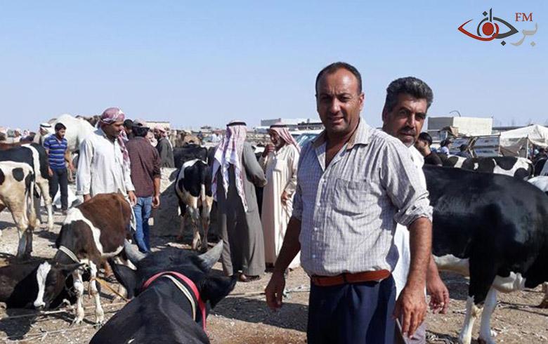 المعركة المرتقبة بإدلب تُنعش سوق الأبقار بمنبج