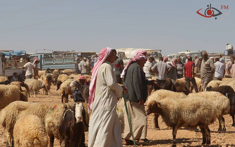 إقبال غير مسبوق على الأضاحي في أسواق كوباني